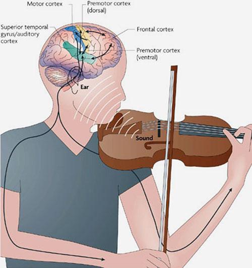 Procesi v možganih med igranjem na instrument
