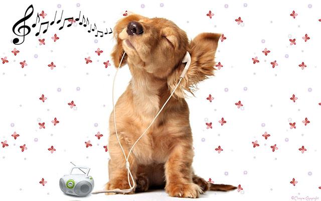 Navdušenost živali nad poslušanjem glasbe